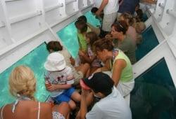 Glassboat Litus